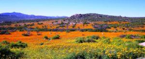 namastat landscape